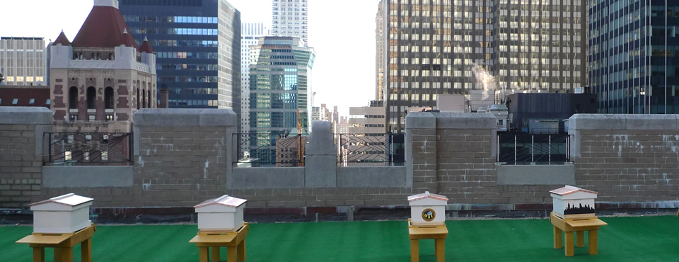 Urban Beekeeping atop of New York's Waldorf Astoria Hotel
