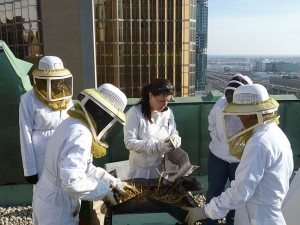 keeping the urban bees warm
